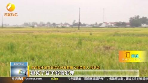 持续降雨影响水稻收割,汉中农业部门多项措施解决秋收难题