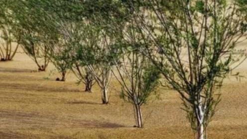 马云创造的蚂蚁森林,已经过了三年,目前是什么样子了呢!