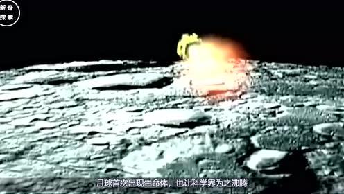 """月球首现""""地外生命"""",科学界沸腾了,这次全是嫦娥四号的功劳"""