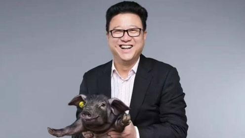 一头猪卖到27万,当初被嘲笑的丁磊早已成功,京东AI托管2000万头