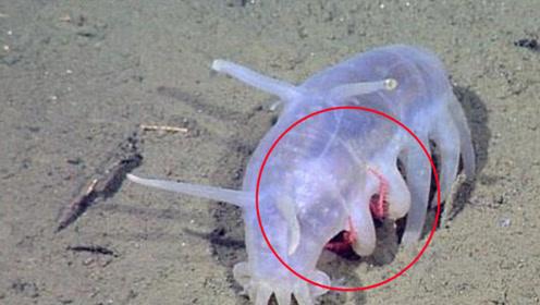 海里也有猪,它们也是躺着吃东西,但它们却能保护帝五蟹的孩子