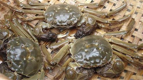 螃蟹可不能放在冷冻室保鲜,教你简单绝招,放7天照样活蹦乱跳!