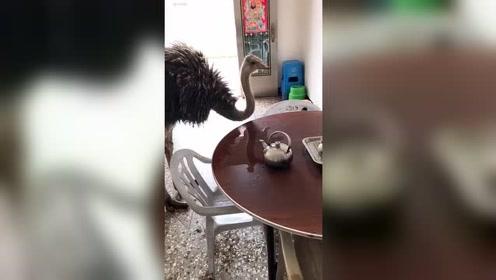 造反了茶壶都弄掉了