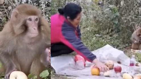 野生猴断左手进村求助,村民暖心喂食