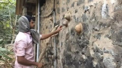 """小伙看到墙壁上长了几个""""包"""",用棍子一撬,差点挨村民打"""