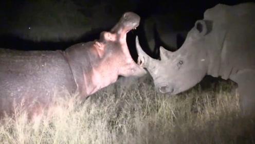 河马无意闯入犀牛领地,下一秒请憋住别笑,河马也太惨了啊