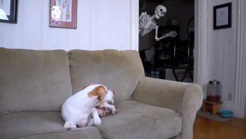 狗狗正在看恐怖片,一个骷髅突然出现在身后,接下来憋住别笑