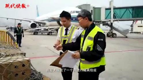 40只金刚鹦鹉乘机来南京,网友打趣:有翅膀还坐飞机?