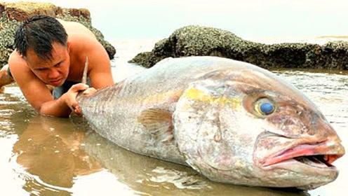 农村小伙在海边捡到一条大鱼,是一条死鱼,看看还能不能吃?