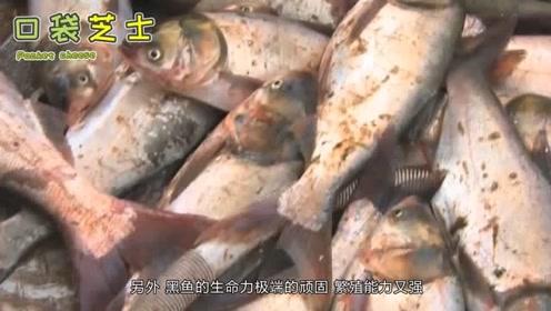 美国人称为地狱鱼,却是我国吃货最爱吃的鱼类,这是什么原因?