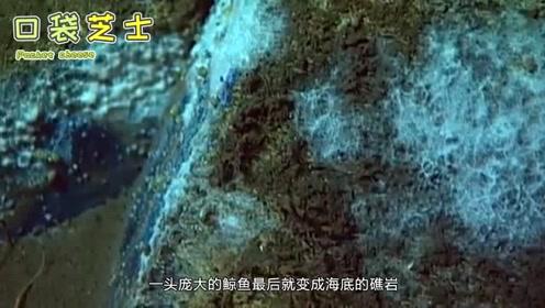 如果鲸鱼去世后,尸体将沉入深海,它的身体会产生什么变化?