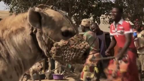 看看人家非洲人养的宠物,跟我们的宠物相比,感觉自己的弱爆了