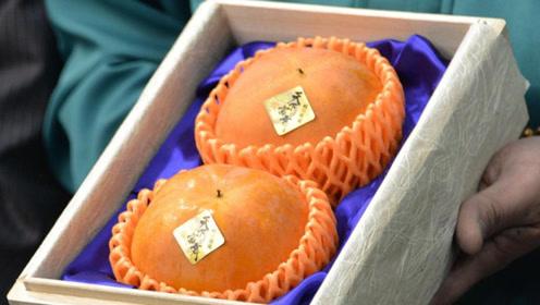 2个柿子70万日元! 日本爱知县拍出天价柿子