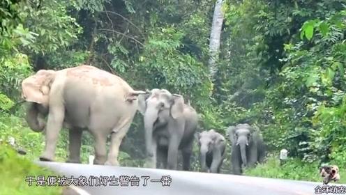 大象半路拦下一辆货车,只想吃几根甘蔗 ,司机举动让人暖心