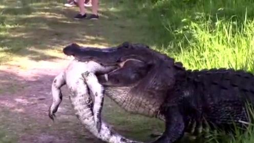 一条鳄鱼嘴里叼着一个东西走过,人们走进一看,顿时吓得不轻