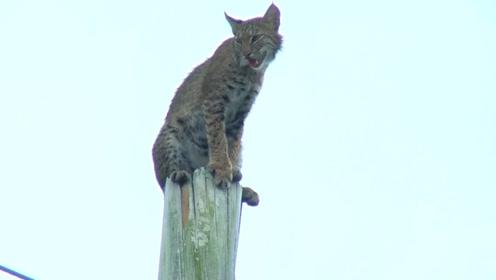 小姐姐喂养5只流浪猫,究竟是善举还是助纣为虐?结果令我们深思