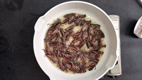 你们吃过蚂蚱吗?还有蚂蚱籽的那种?鲜活的乱蹦的那种直接油炸