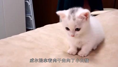 只虚弱小猫蹲在路边,小伙不只是拍照,还挽救了濒死的小黑猫