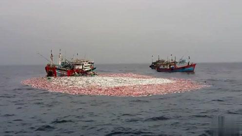 渔船捕捞这一网直接爆网了