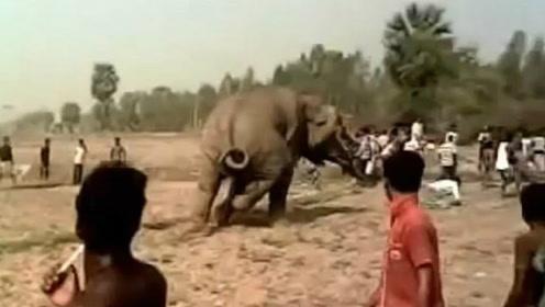 印度一村民扔东西挑衅大象 差点被愤怒大象踩死