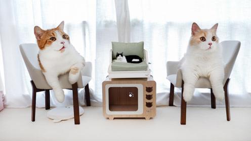 花7000元猫房大改造!让人类嫉妒的豪华家具,猫咪感动哭了!