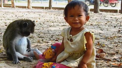 猴子妈妈竟把人类小女孩当做自己的孩子,抱着不愿撒手