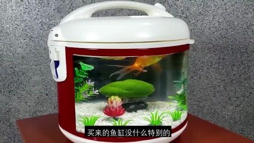 电饭锅除了给你煮鱼吃,还能改造成观赏型的鱼缸!