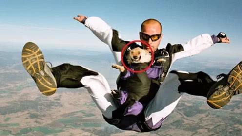 主人带狗狗高空跳伞,着陆后,狗狗的反应大家千万憋住别笑!