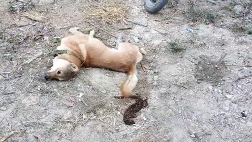狗狗以为咬到了老鼠,一口下去觉得不对劲,镜头记录全程