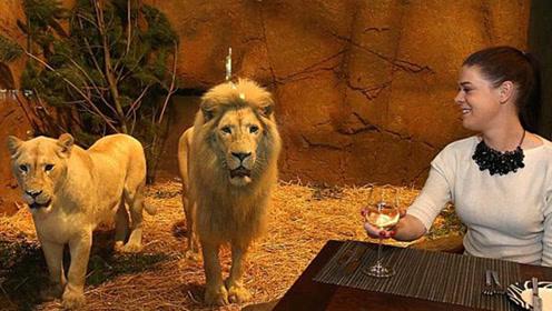"""全球最""""危险""""的酒店,吃饭时狮子看着你,你敢住吗?"""