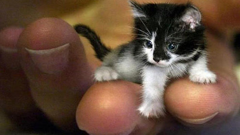 世界最小动物,你见过几种?超迷你猫咪比手掌还小