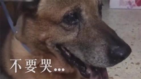 十三岁的老狗被主人扔在路边,泪流不止!
