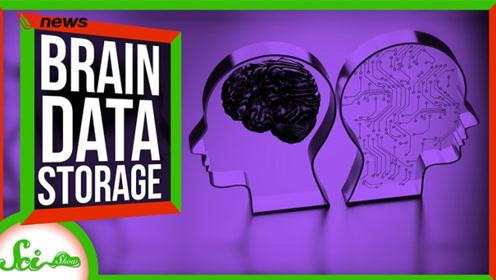 我们的大脑可以储存多少数据?