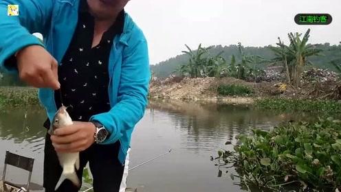 河边大哥选择这个地方钓竿撒下,第一竿就收获肥鲤鱼