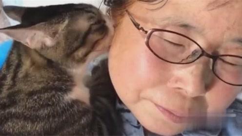 猫咪就爱吸女主人的耳朵,好痛的!