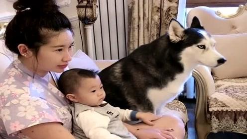 老婆抱着孩子看电视,二哈也去凑热闹,真不拿自己当外人!