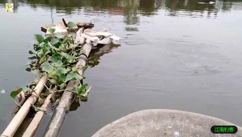 河边撒下钓竿,等了许久终于被拉动瞬间就收获肥鲫鱼