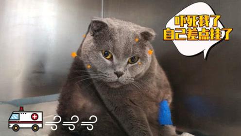 肥猫忽然倒下被紧急送医,脱水抽血都抽不动,主人大笑血都没了