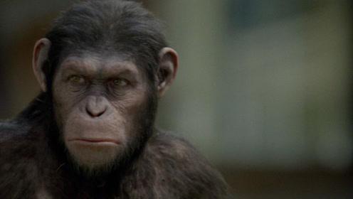 猩球崛起?《七个世界,一个地球》才是猩猩们的生活现状!