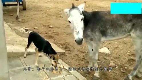 偷驴食吃的狗狗,竟还对驴大吼大叫,这驴表现也太无奈了吧。