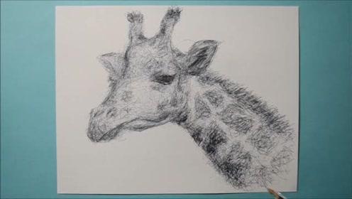 令人佩服的素描功底,一只可爱的长颈鹿就这样出现了!