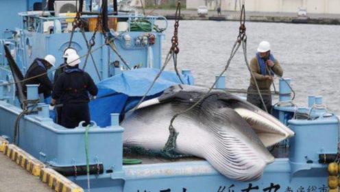 极其残忍!日本捕杀海豚现场航拍画面曝光