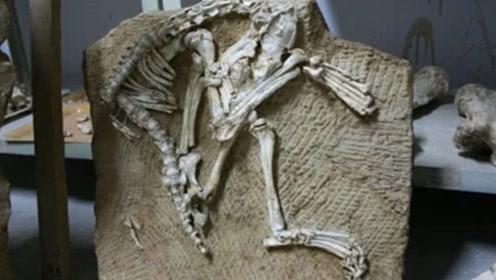 秦始皇祖母墓被打开,在墓中出土一灭绝动物,引起外界轰动!