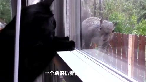"""猫咪对""""鼠""""类动物都感兴趣,奈何智商完全不在线"""