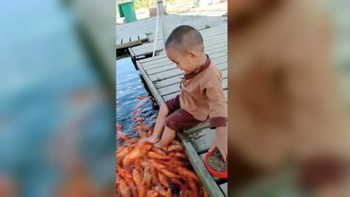喂鱼泡脚两不误!