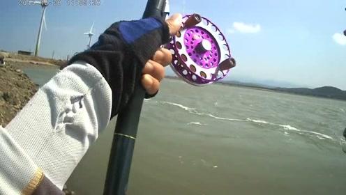 台湾苗栗入海口前打钓鱼,黑鲷鱼越钓越大,这种感觉对钓鱼人来说很美妙