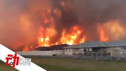 """悉尼首发""""超灾难级""""预警:澳大火持续半月 超600所学校停课"""