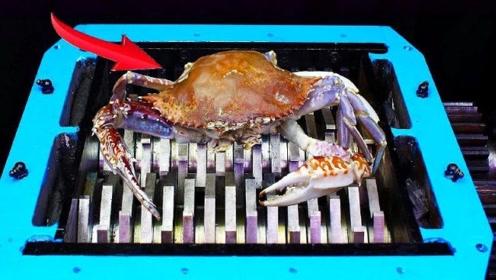 螃蟹被粉碎机搅拌的过程太解压,看完人都舒服了