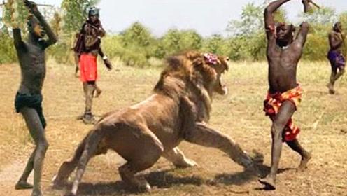 真正敢正面与狮子抢食的部落,只靠一把长矛,狮子见了都害怕