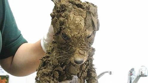 男子从泥坑里救出一只小狗,带回家洗干净后吓一跳:这根本不是狗